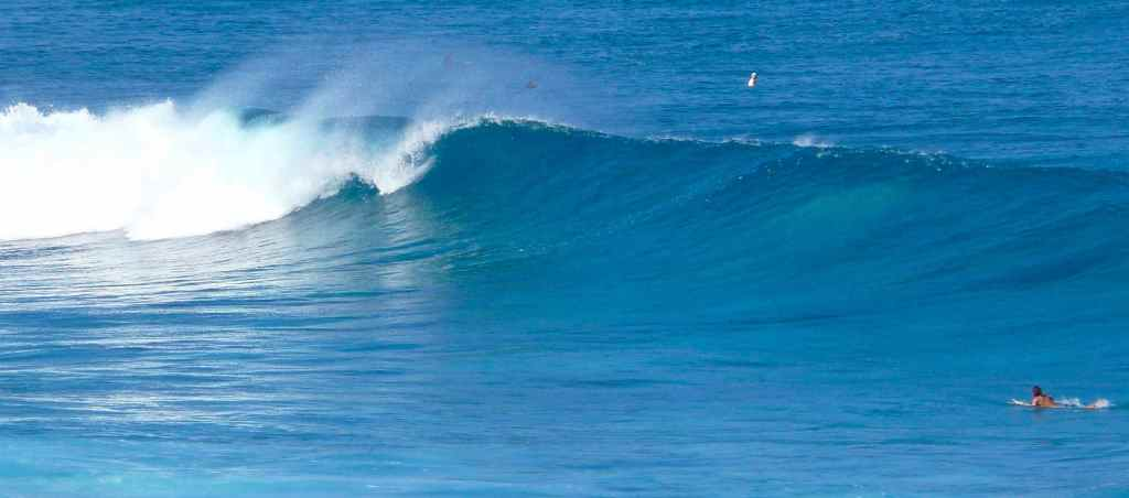 Surfing - Maui - Hawaii